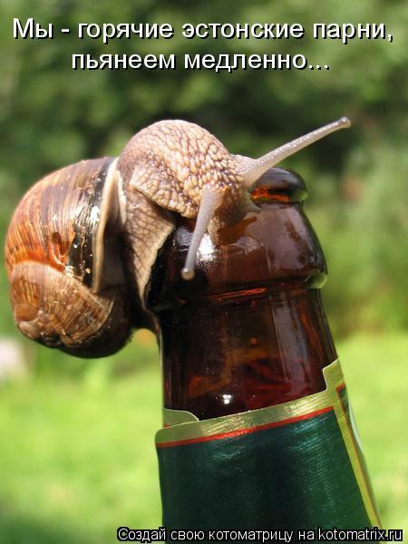 Котоматрица: Мы - горячие эстонские парни,  пьянеем медленно...