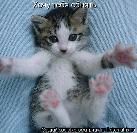 Котоматрица: Хочу тебя обнять