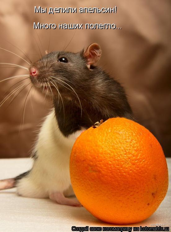 Котоматрица: Мы делили апельсин! Много наших полегло...