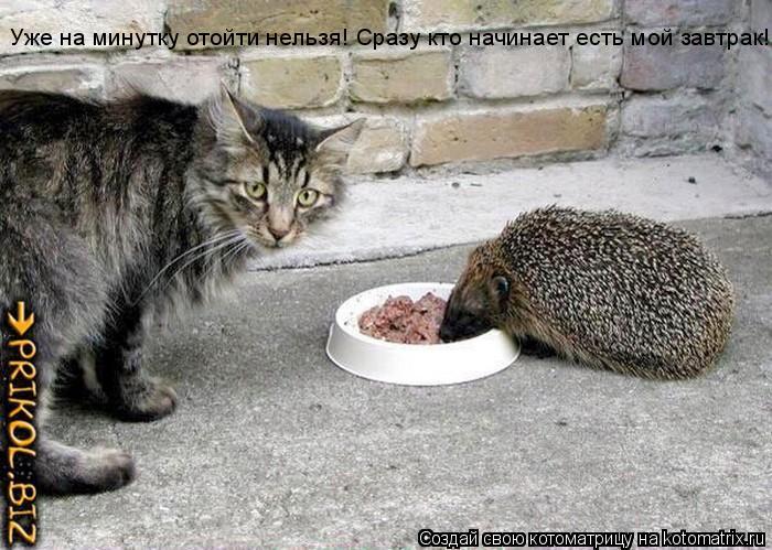 Котоматрица: Уже на минутку отойти нельзя! Сразу кто начинает есть мой завтрак!