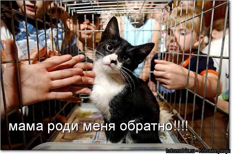 Котоматрица: мама роди меня обратно!!!!