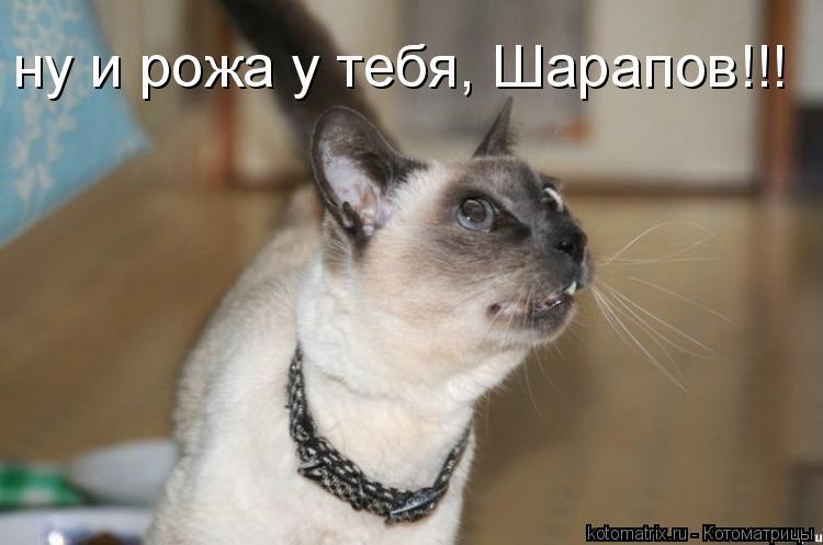 Котоматрица: ну и рожа у тебя, Шарапов!!!