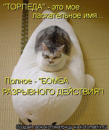 """Котоматрица: """"ТОРПЕДА"""" - это мое  ласкательное имя... Полное - """"БОМБА  РАЗРЫВНОГО ДЕЙСТВИЯ""""!"""