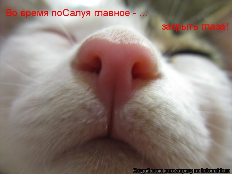 Котоматрица: Во время поСалуя главное - ... закрыть глаза!