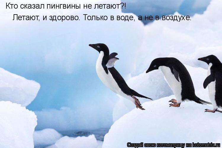 Котоматрица: Кто сказал пингвины не летают?!   Летают, и здорово. Только в воде, а не в воздухе.