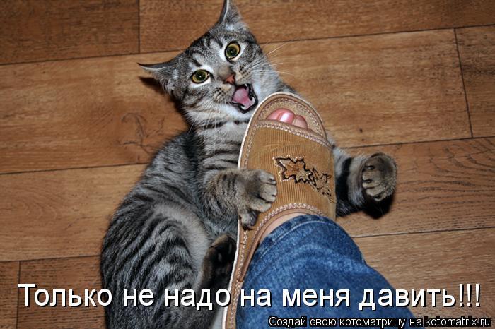 Котоматрица: Только не надо на меня давить!!!