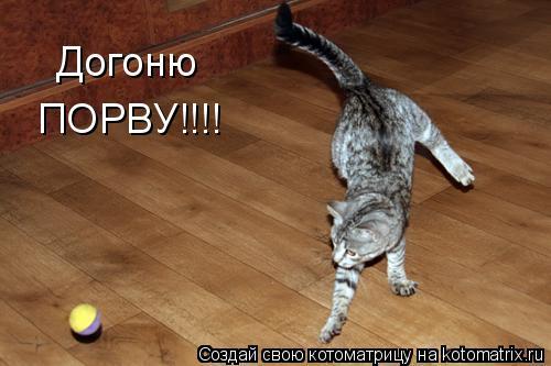 Котоматрица: Догоню ПОРВУ!!!!