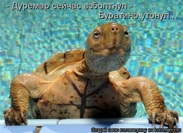 Котоматрица: - Дуремар сейчас взболтнул -   Буратино утонул...