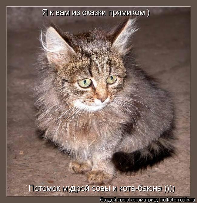 Котоматрица: Я к вам из сказки прямиком ) Потомок мудрой совы и кота-баюна ))))