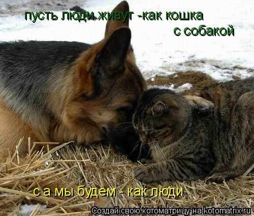 Котоматрица: пусть люди живут -как кошка  с собакой с а мы будем - как люди