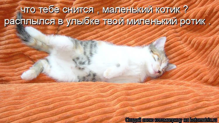 Котоматрица: что тебе снится , маленький котик ? расплылся в улыбке твой миленький ротик .