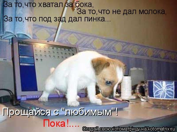 """Котоматрица: За то,что хватал за бока, За то,что не дал молока, За то,что под зад дал пинка... Прощайся с """"любимым""""! Пока!...."""