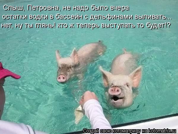 Котоматрица: Слыш, Петровна, не надо было вчера остатки водки в бассейн с дельфинами выливать... нет, ну ты глянь! кто ж теперь выступать то будет!?