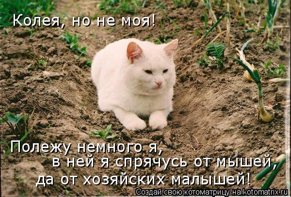 Котоматрица: Колея, но не моя! Полежу немного я, в ней я спрячусь от мышей, да от хозяйских малышей!
