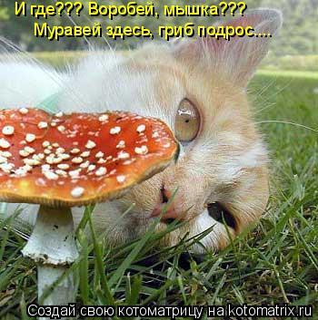 Котоматрица: И где??? Воробей, мышка??? Муравей здесь, гриб подрос....