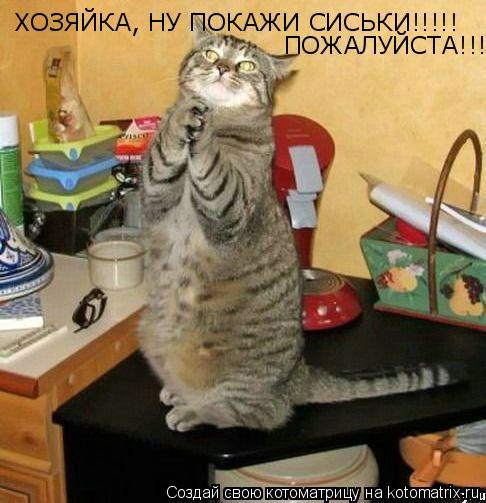 Котоматрица: ХОЗЯЙКА, НУ ПОКАЖИ СИСЬКИ!!!!!  ПОЖАЛУЙСТА!!!