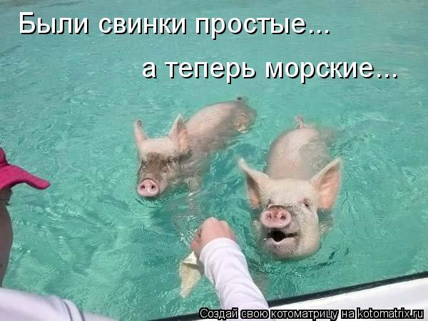 Котоматрица: Были свинки простые... а теперь морские...