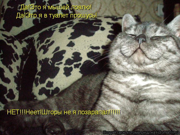 Котоматрица: Да!Это я мышей ловлю! Да!Это я в туалет прошусь! НЕТ!!!Неет!Шторы не я позарапал!!!!!!