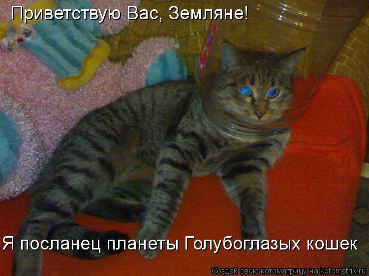 Котоматрица: Приветствую Вас, Земляне! Я посланец планеты Голубоглазых кошек