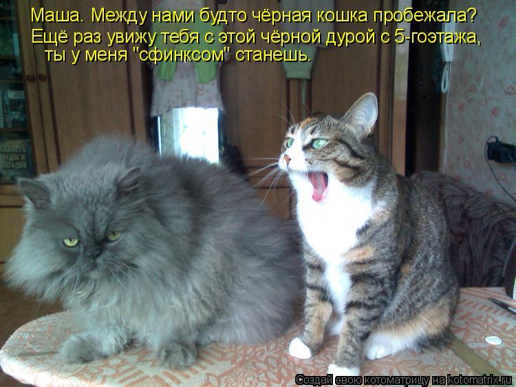 """Котоматрица: Маша. Между нами будто чёрная кошка пробежала? Ещё раз увижу тебя с этой чёрной дурой с 5-гоэтажа, ты у меня """"сфинксом"""" станешь."""
