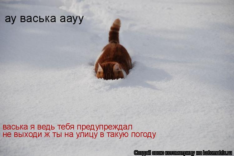 Котоматрица: васька я ведь тебя предупреждал не выходи ж ты на улицу в такую погоду ау васька аауу