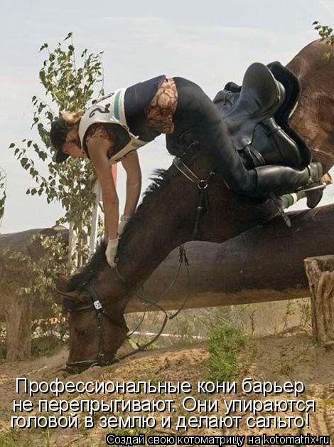 Котоматрица: Профессиональные кони барьер  не перепрыгивают. Они упираются головой в землю и делают сальто!