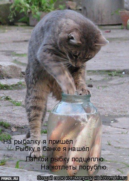 Котоматрица: На рыбалку я пришёл Рыбку в банке я нашёл Лапкой рыбку подцеплю На котлеты порублю.