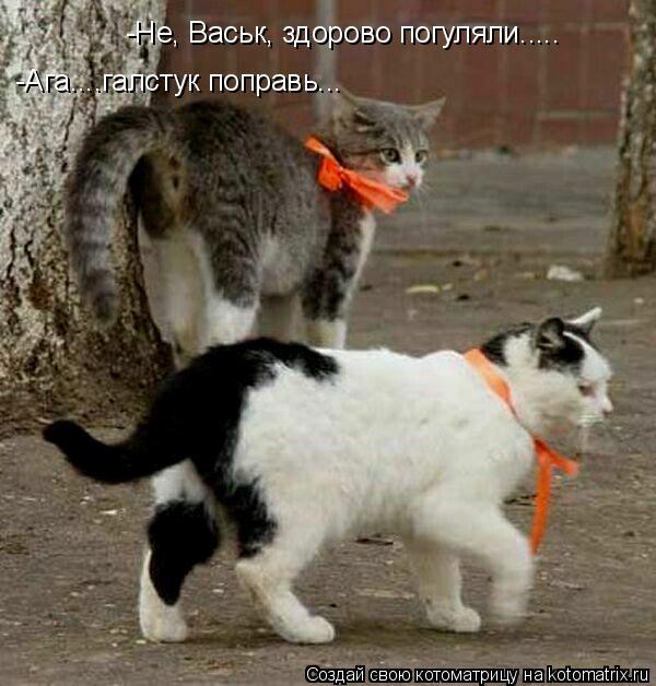 Котоматрица: -Не, Васьк, здорово погуляли..... -Ага....галстук поправь...