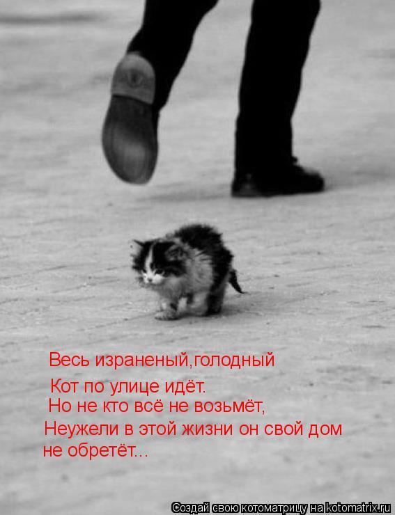 Котоматрица: Весь израненый,голодный Кот по улице идёт. Но не кто всё не возьмёт, Неужели в этой жизни он свой дом не обретёт...
