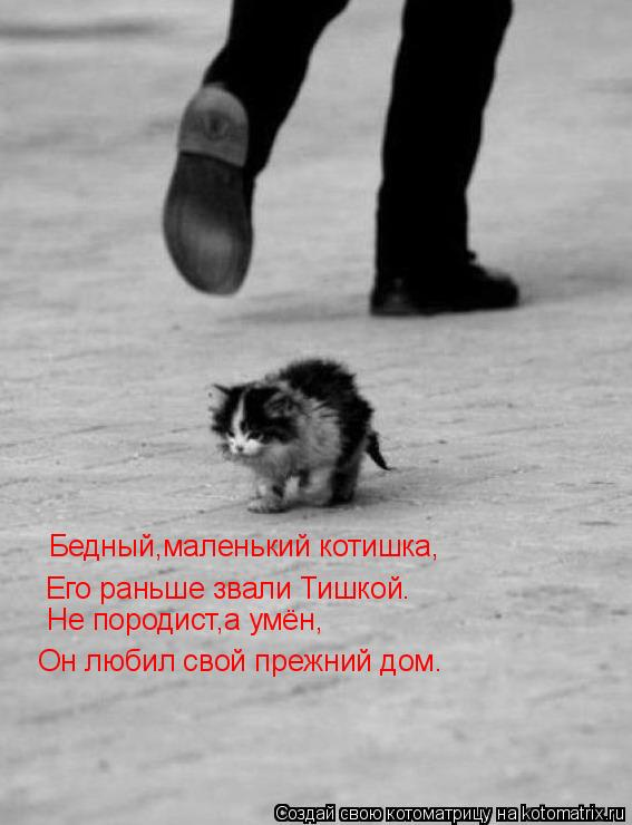 Котоматрица: Бедный,маленький котишка, Его раньше звали Тишкой. Он любил свой прежний дом. Не породист,а умён,