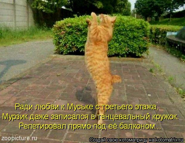 Котоматрица: Ради любви к Муське с третьего этажа, Мурзик даже записался в танцевальный кружок. Репетировал прямо под её балконом...