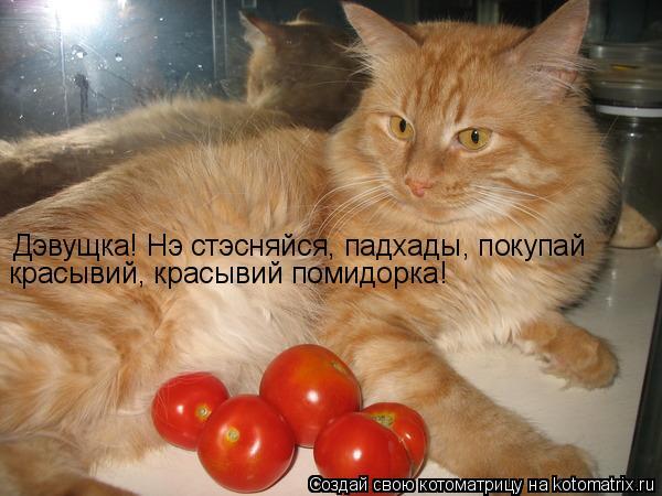 Котоматрица: Дэвущка! Нэ стэсняйся, падхады Дэвущка! Нэ стэсняйся, падхады, покупай красывий, красывий помидорка!
