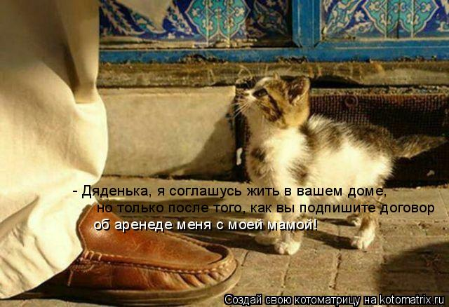 Котоматрица: - Дяденька, я соглашусь жить в вашем доме, но только после того, как вы подпишите договор  об аренеде меня с моей мамой!