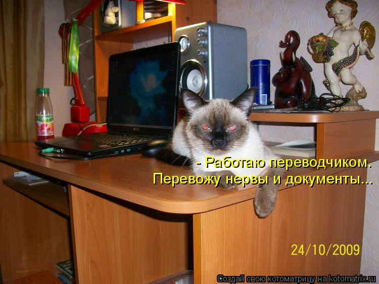 Котоматрица: - Работаю переводчиком. Перевожу нервы и документы...