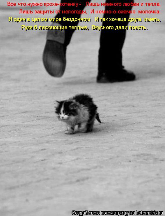 Котоматрица: Все что нужно крохе-котенку -   Лишь немного любви и тепла,   Лишь защиты от непогоды,  И немно-о-ожечко  молочка… Я один в целом мире бездонном