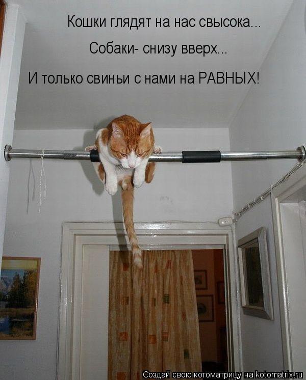 Котоматрица: Кошки глядят на нас свысока... Собаки- снизу вверх... И только свиньи с нами на РАВНЫХ!