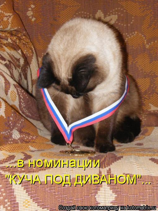 "Котоматрица: ...в номинации  ""КУЧА ПОД ДИВАНОМ""..."
