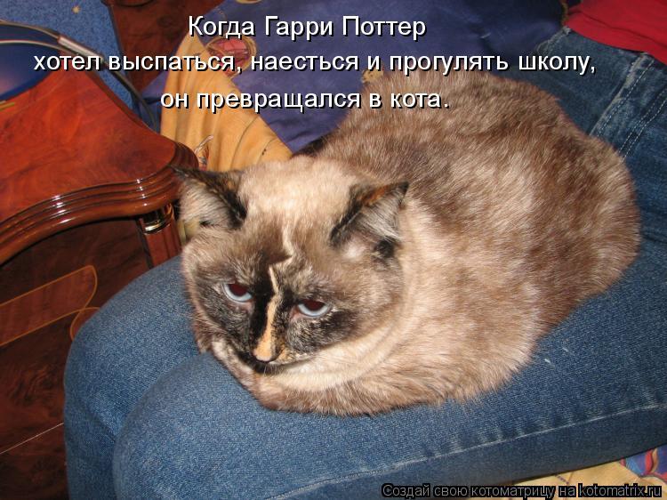 Котоматрица: Когда Гарри Поттер хотел выспаться, наесться и прогулять школу, он превращался в кота.