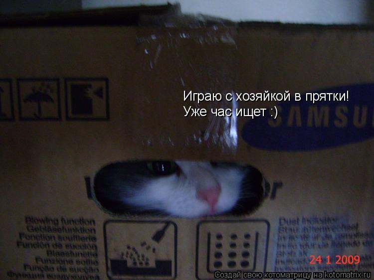 Котоматрица: Играю с хозяйкой в прятки! Уже час ищет :)