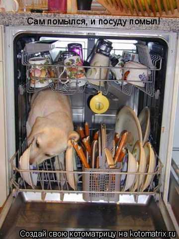 Котоматрица: Сам помылся, и посуду помыл!
