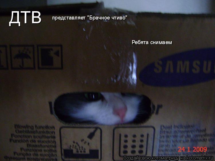 "Котоматрица: ДТВ представляет ""Брачное чтиво"" Ребята снимаем"