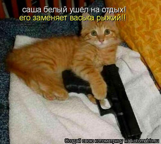Котоматрица: саша белый ушёл на отдых! его заменяет васька рыжий!!