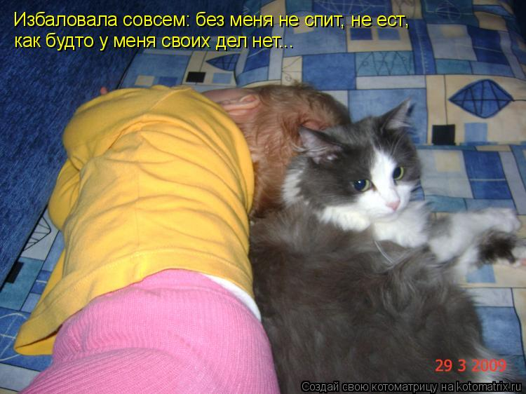 Котоматрица: Избаловала совсем: без меня не спит, не ест как будто у меня своих дел нет... ,