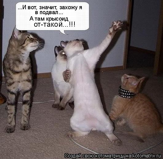 Котоматрица: ...И вот, значит, захожу я в подвал... А там крысоид от-такой...!!!
