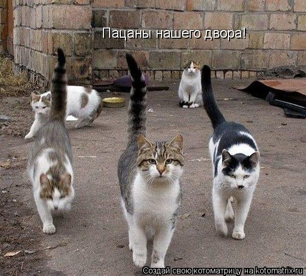 Котоматрица: Пацаны нашего двора!