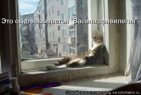 """Котоматрица: Это окно называется """"Васина привилегия"""""""