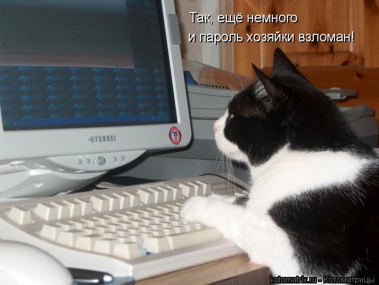 Котоматрица: Так, ещё немного и пароль хозяйки взломан!