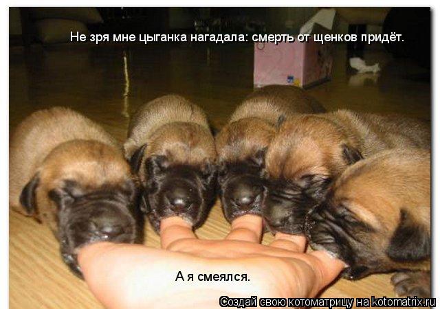 Котоматрица: Не зря мне цыганка нагадала: смерть от щенков придёт. А я смеялся.