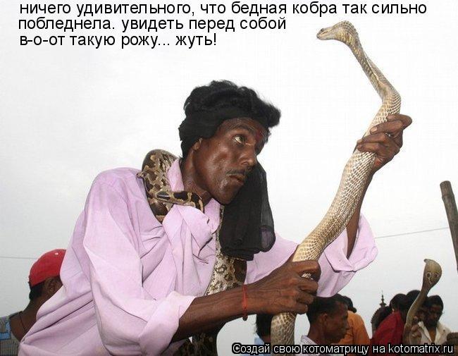 Котоматрица: ничего удивительного, что бедная кобра так сильно  побледнела. увидеть перед собой  в-о-от такую рожу... жуть!