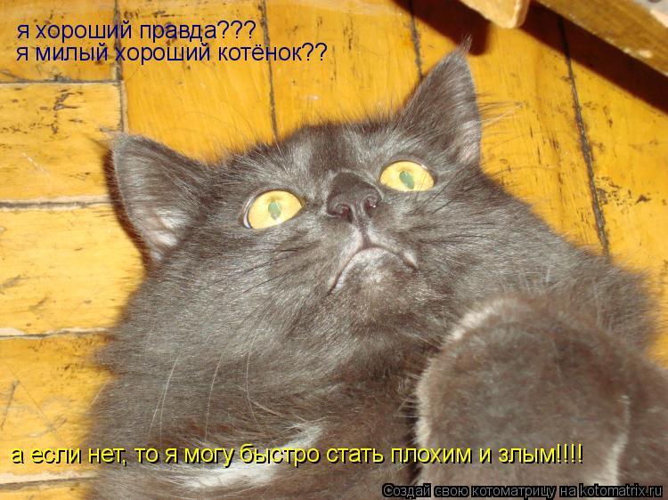 Котоматрица: я хороший правда??? я милый хороший котёнок?? а если нет, то я могу быстро стать плохим и злым!!!!